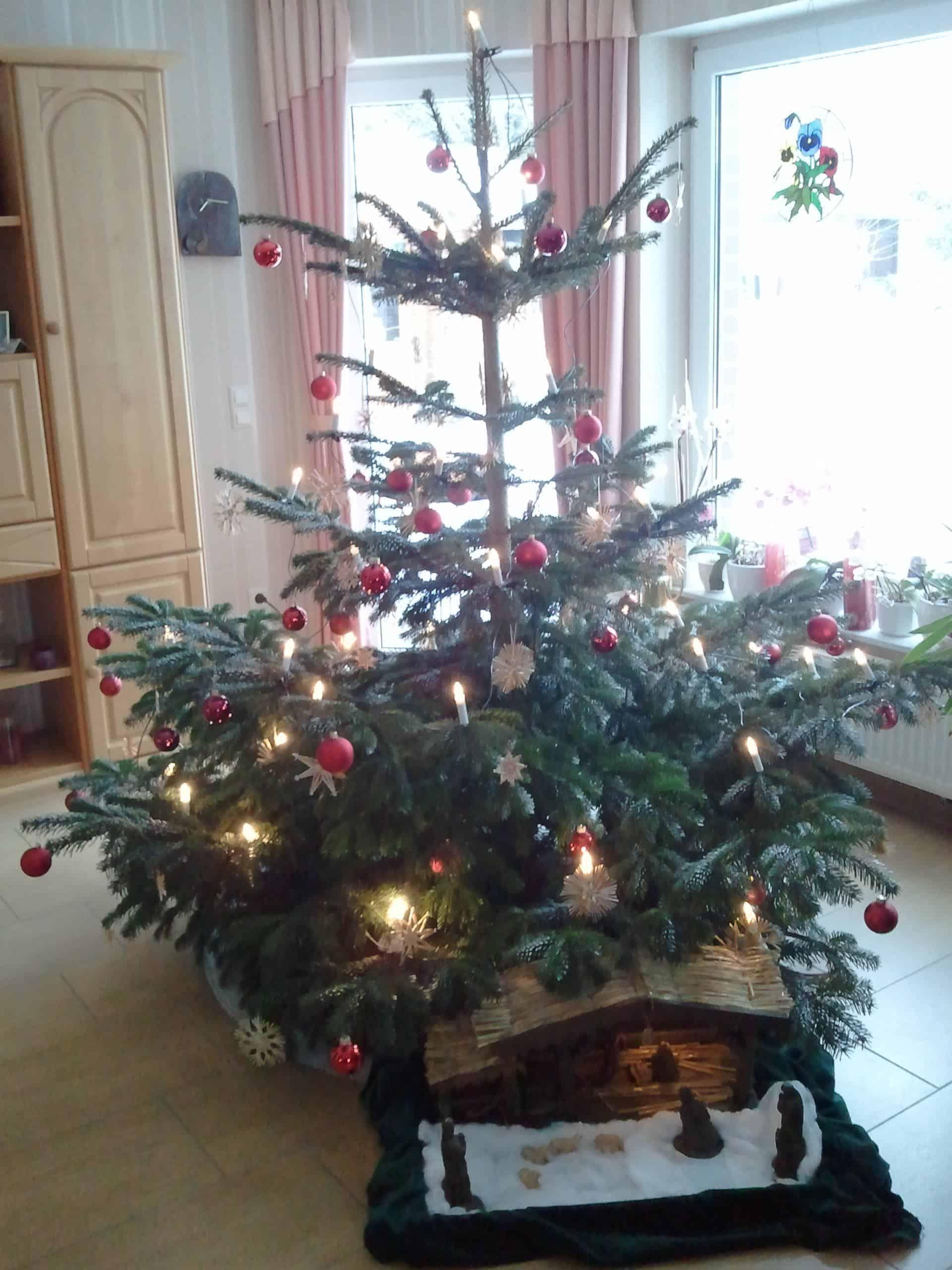 Baum Kock