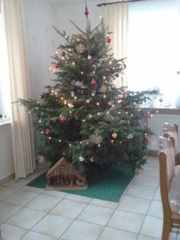 Baum Kock2