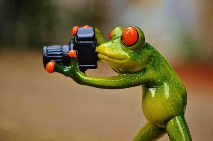 frog-foto